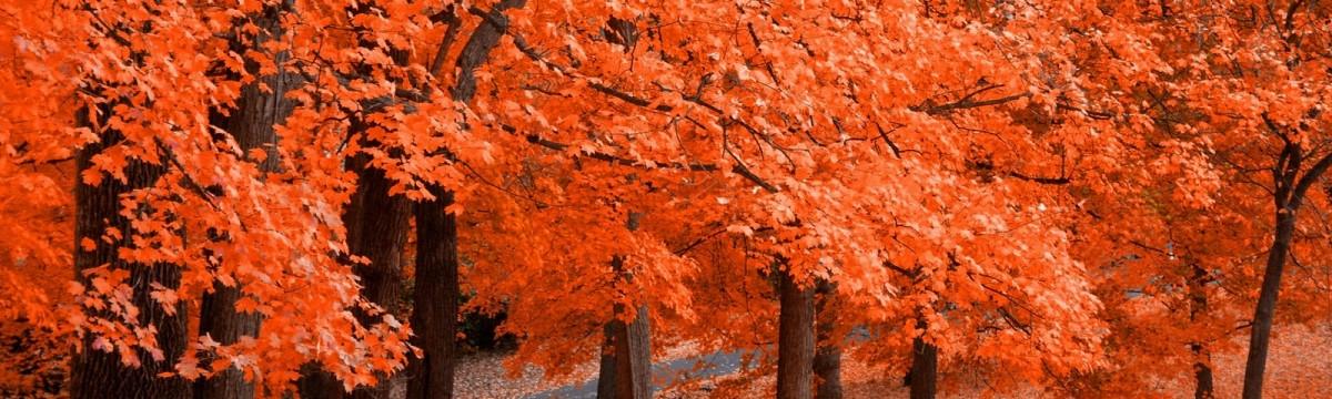 op naar een mooie herfst
